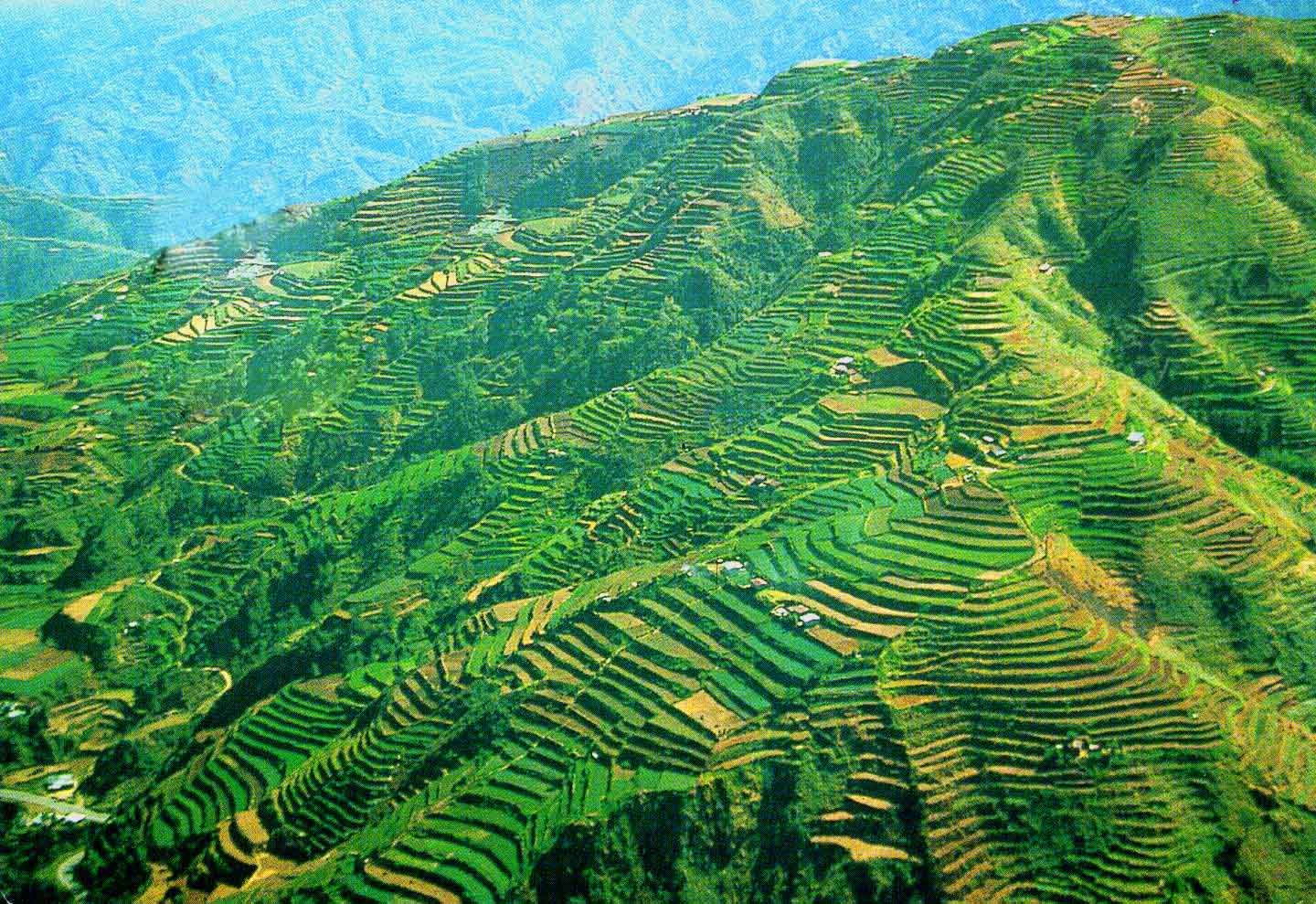 The music culture throughout the philippines earthpop for What are terraces